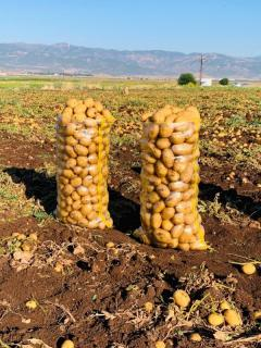 Antep altın patates.