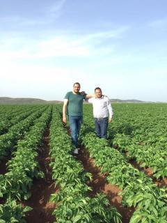2017 Gaziantep Nurdağı yazlık Ekimlerimiz