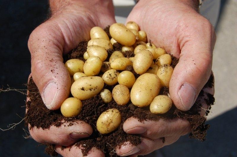 Tohum Üretimi